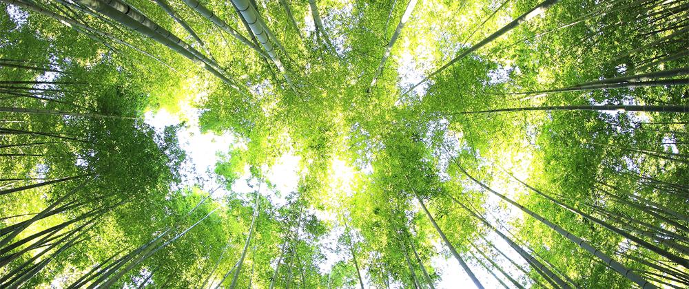¿Cómo obtener la licencia ambiental?